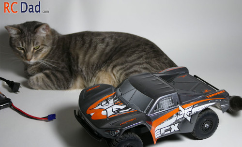 rc car cat