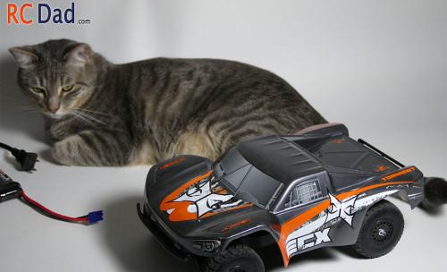 rc car cat